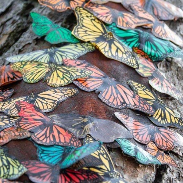 Parallel Migrations Butterflies